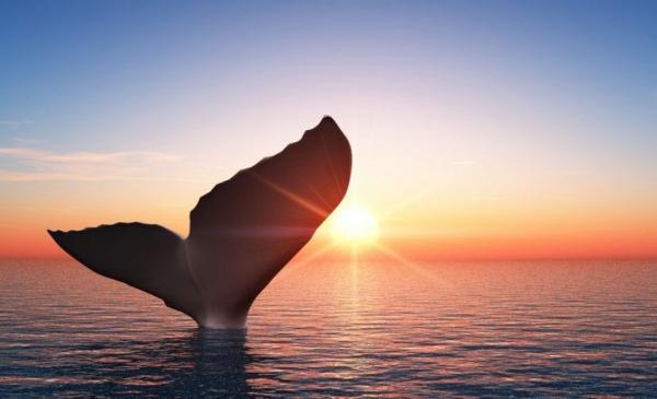 Число биткоин-китов достигло исторического максимума